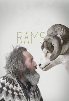 مشاهدة وتحميل فلم Rams الكباش اونلاين