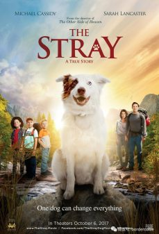 مشاهدة وتحميل فلم The Stray  اونلاين