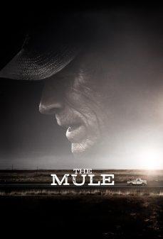 مشاهدة وتحميل فلم The Mule مهرب المخدرات اونلاين